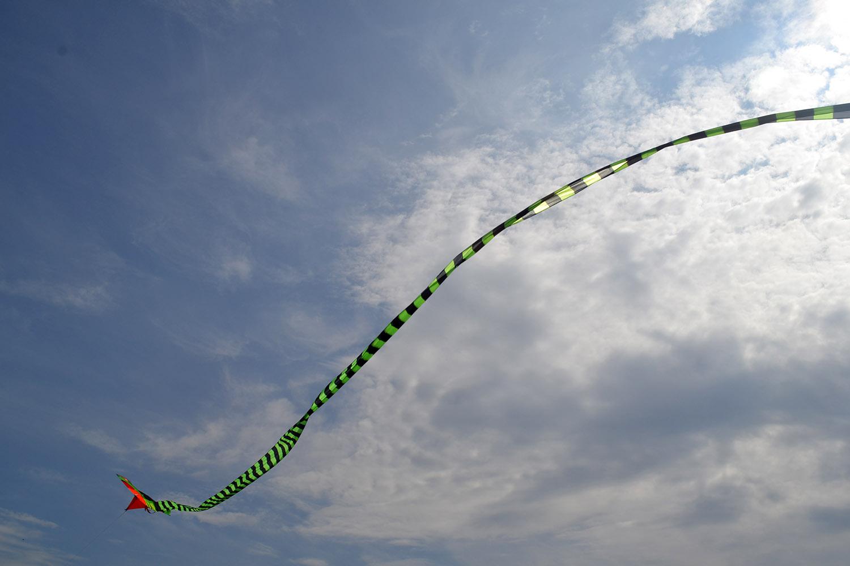 Питон 15 метров изображение 4