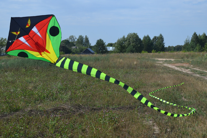 Питон 30 метров изображение 6