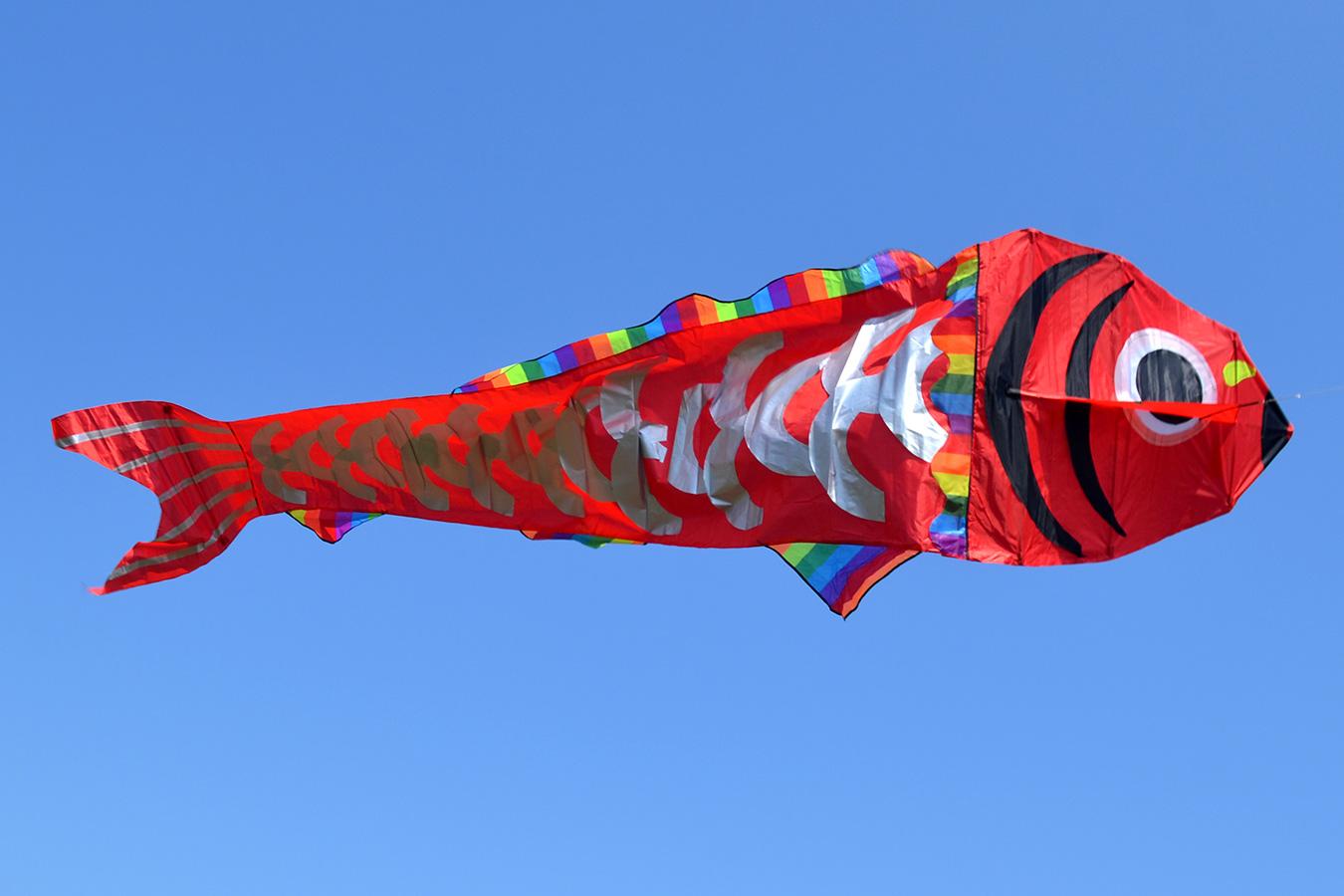 Красный барбус изображение 0