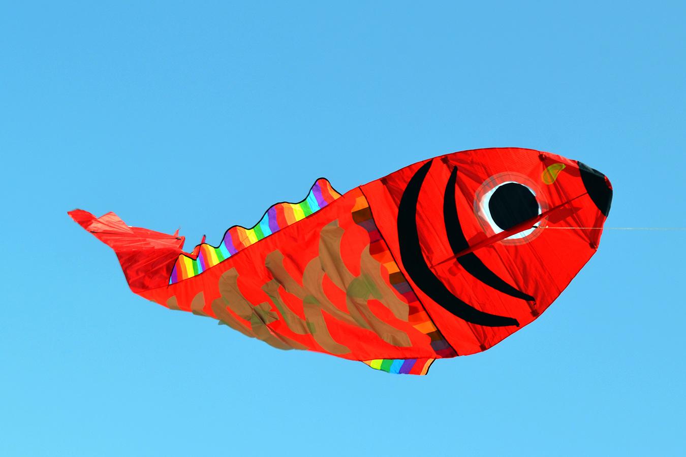 Красный барбус изображение 2