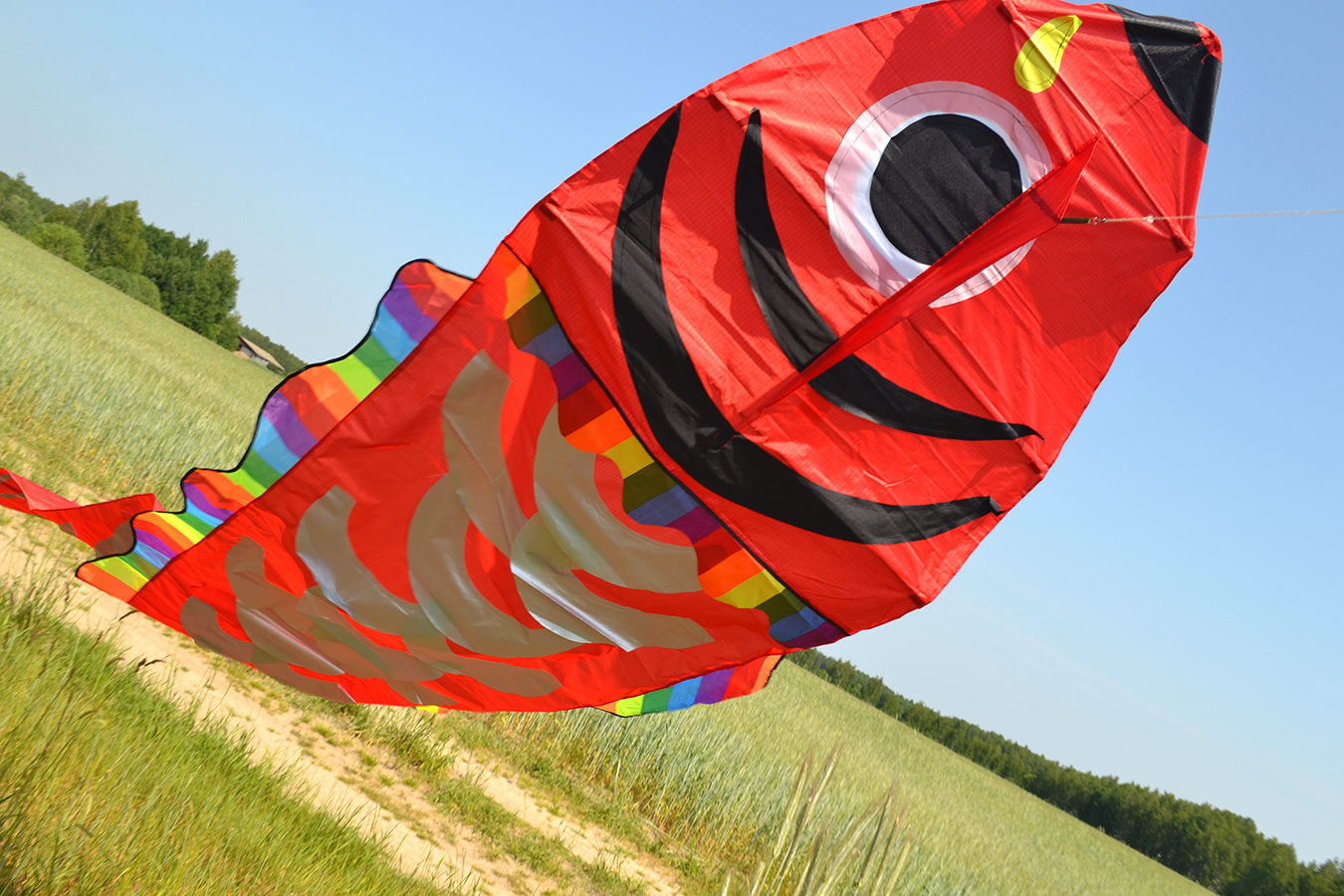 Красный барбус изображение 3