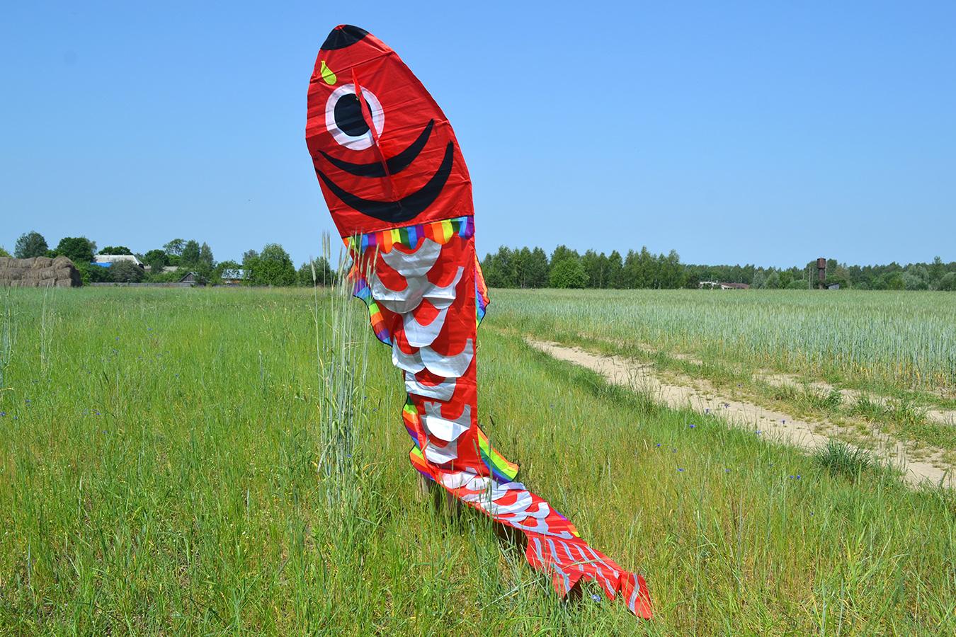 Красный барбус изображение 6