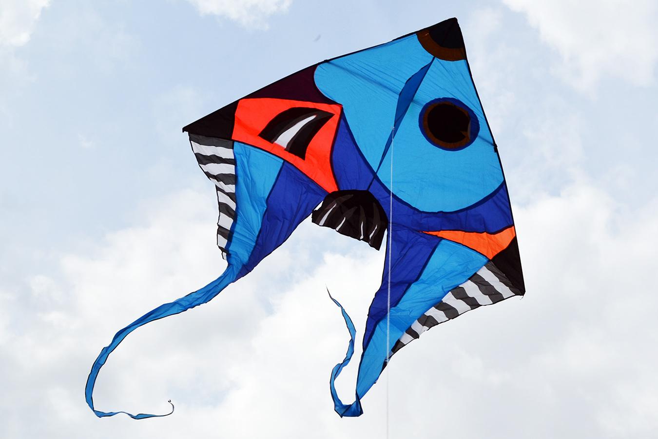 Фронтоза синяя изображение 0