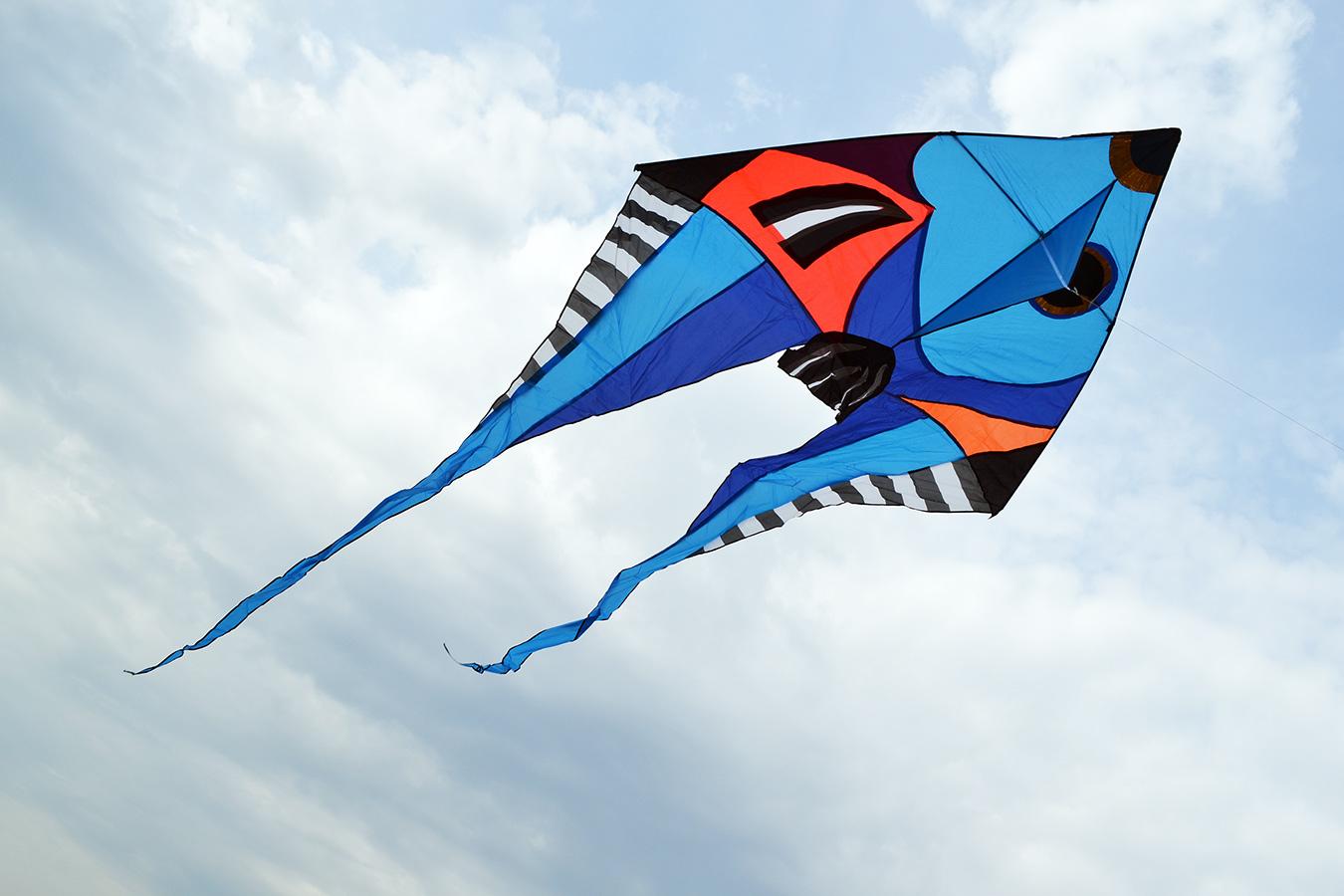 Фронтоза синяя изображение 1