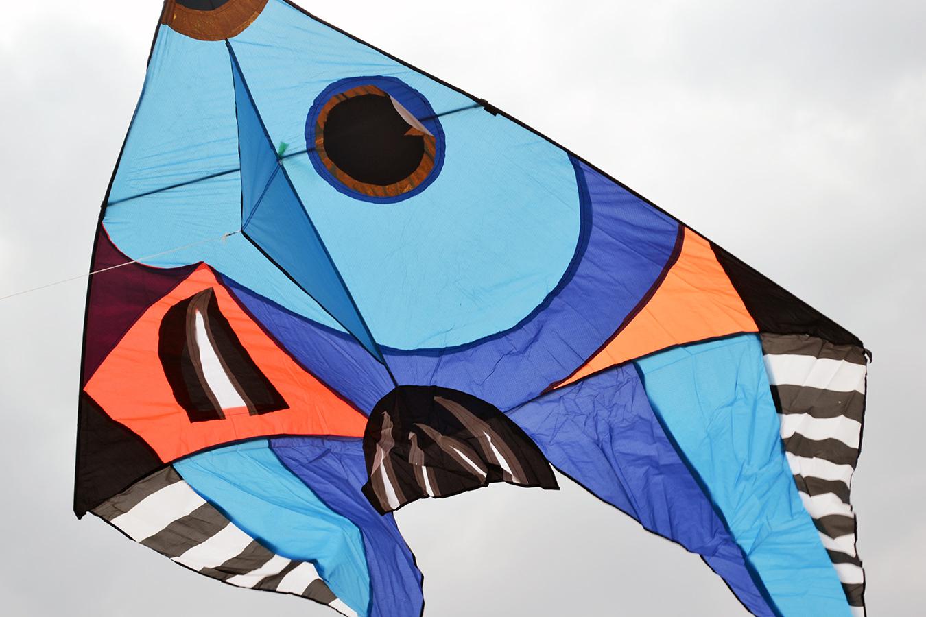 Фронтоза синяя изображение 2