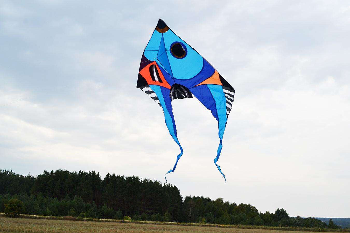 Фронтоза синяя изображение 3