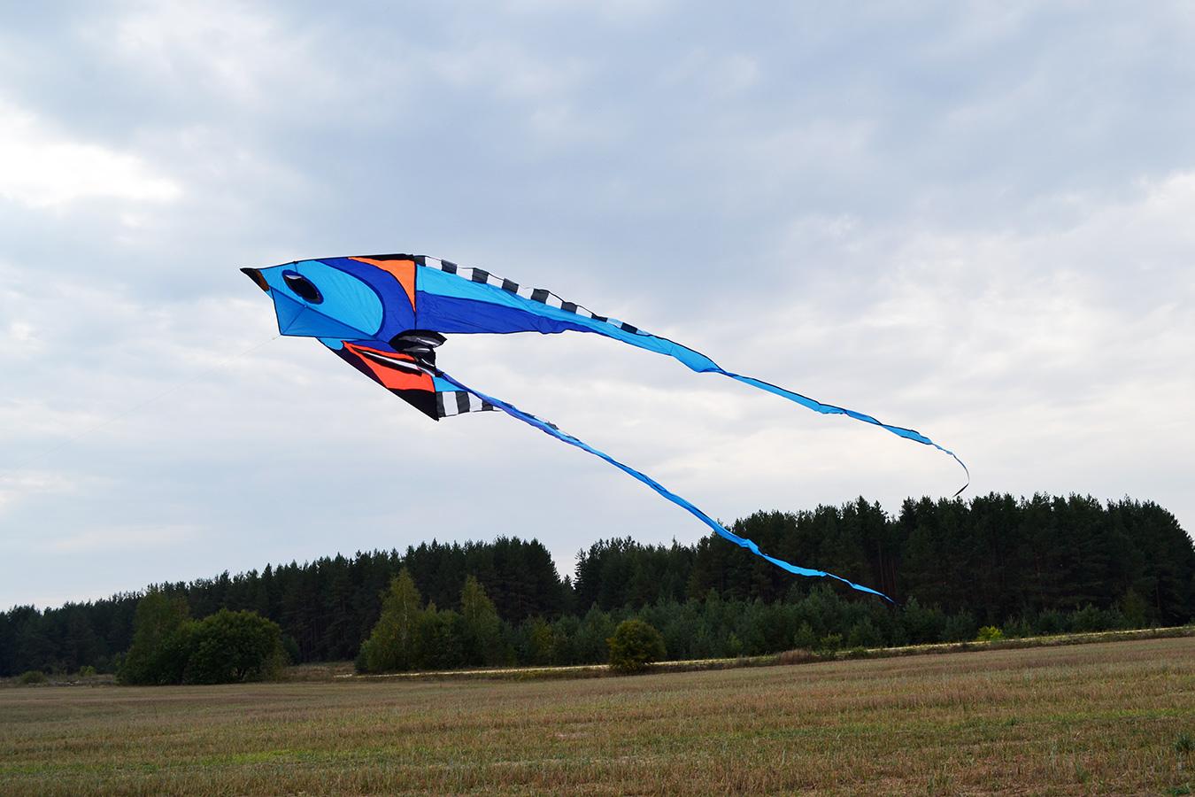 Фронтоза синяя изображение 4