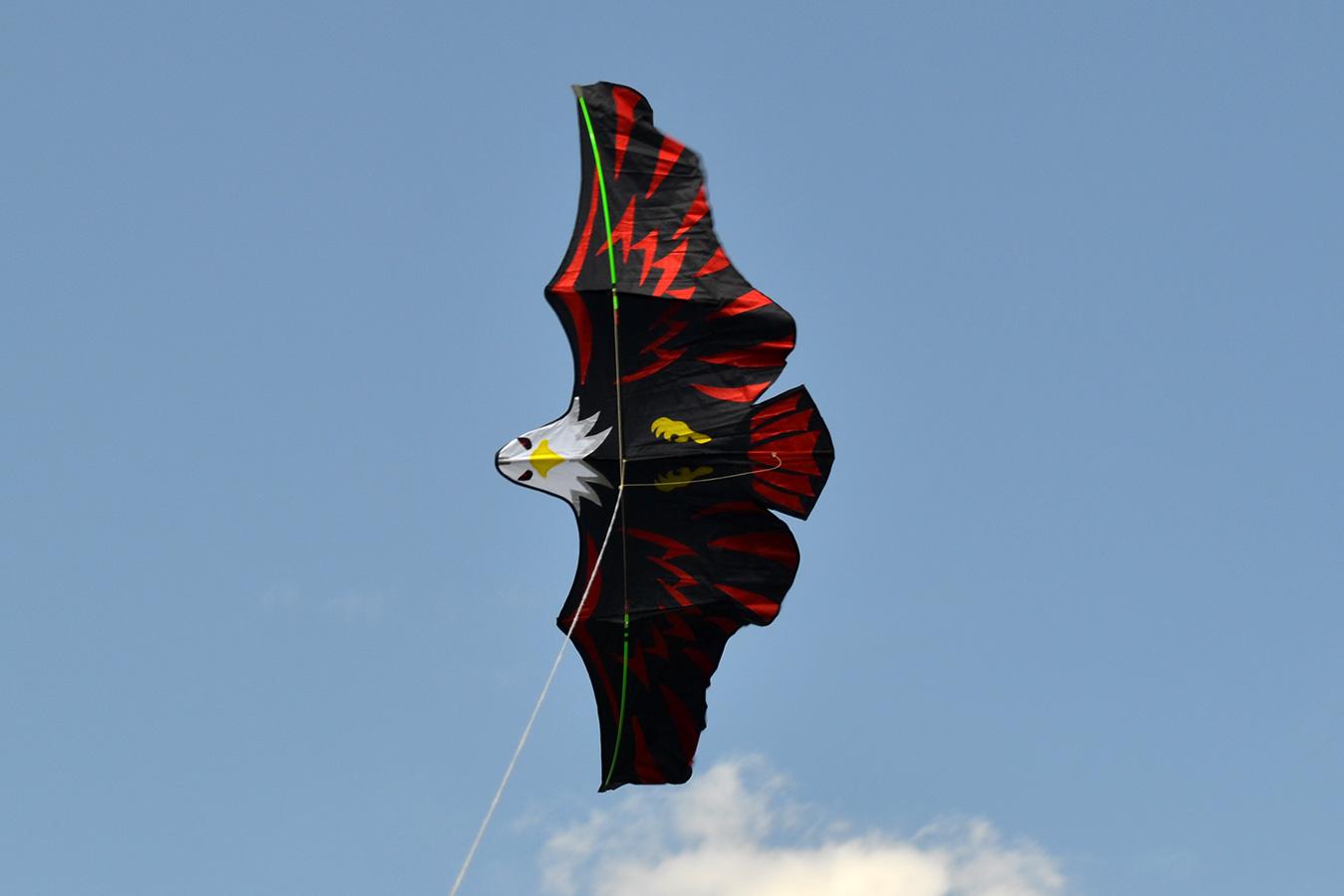 Имперский Орел изображение 0