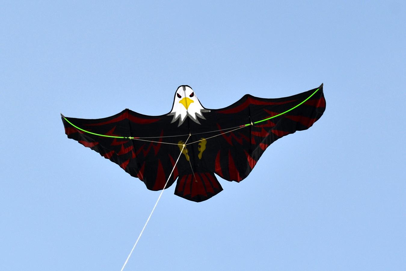 Имперский Орел изображение 2