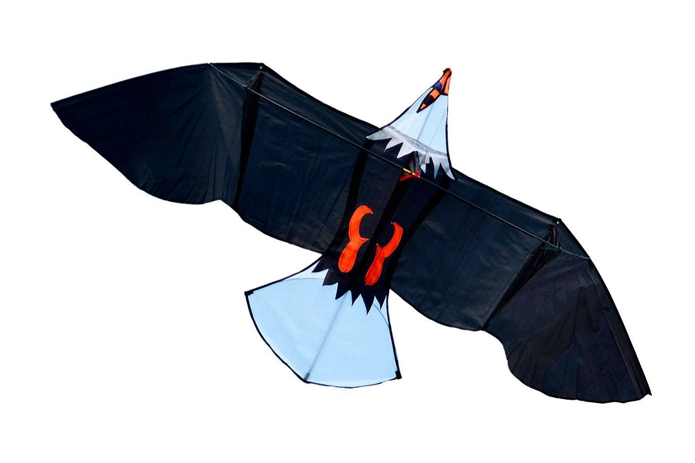 Молуккский орёл, воздушный змей [ZBMW]