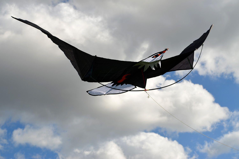 Молуккский орёл изображение 0