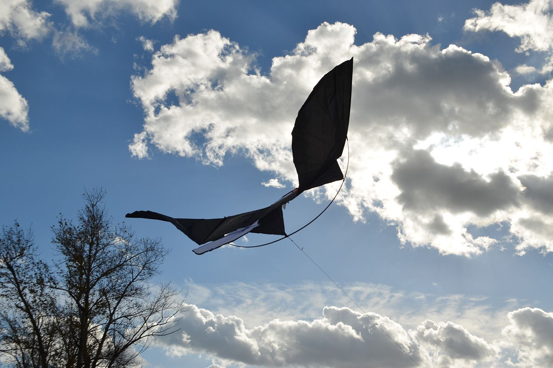 Молуккский орёл изображение 1