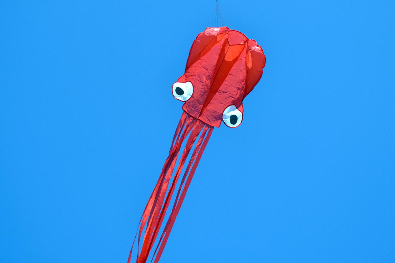 Красный осьминог изображение 0
