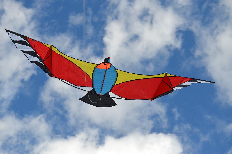 Oранжевая чайка изображение 2