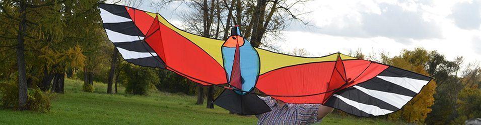 Oранжевая чайка изображение 5