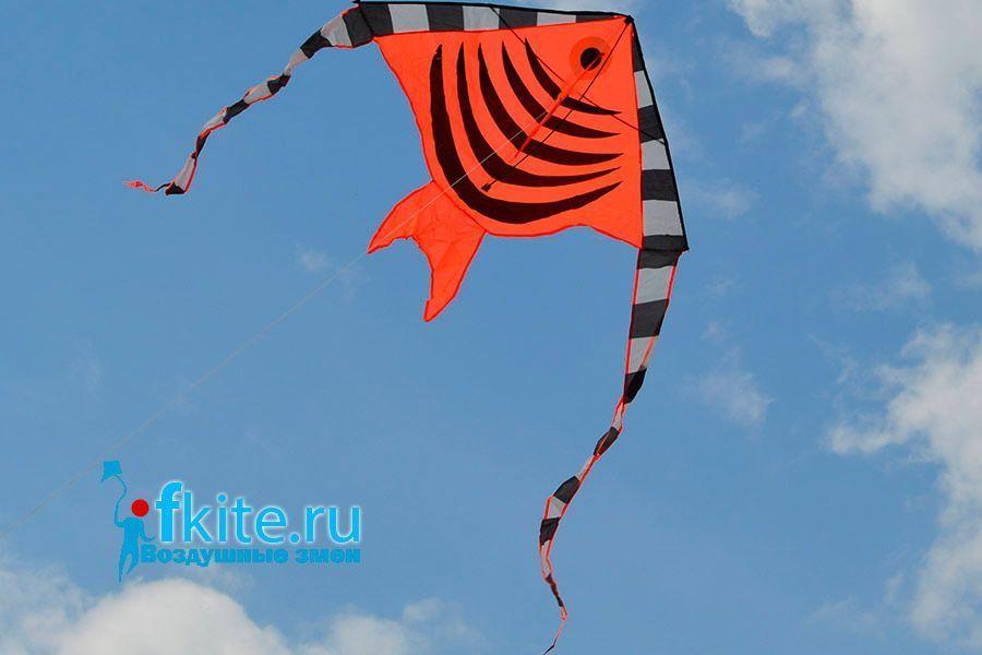 Тропическая рыбка изображение 0