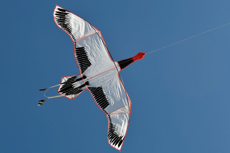 Японский журавль изображение 1