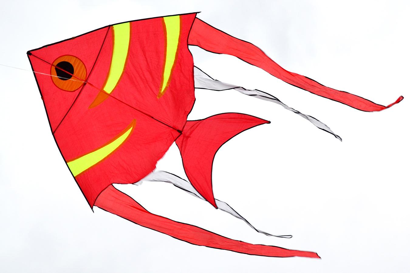 Рыба бабочка изображение 1