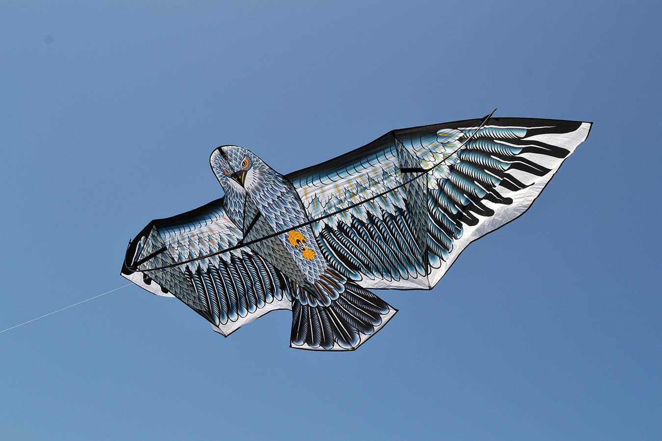 Гигантский Кондор изображение 1