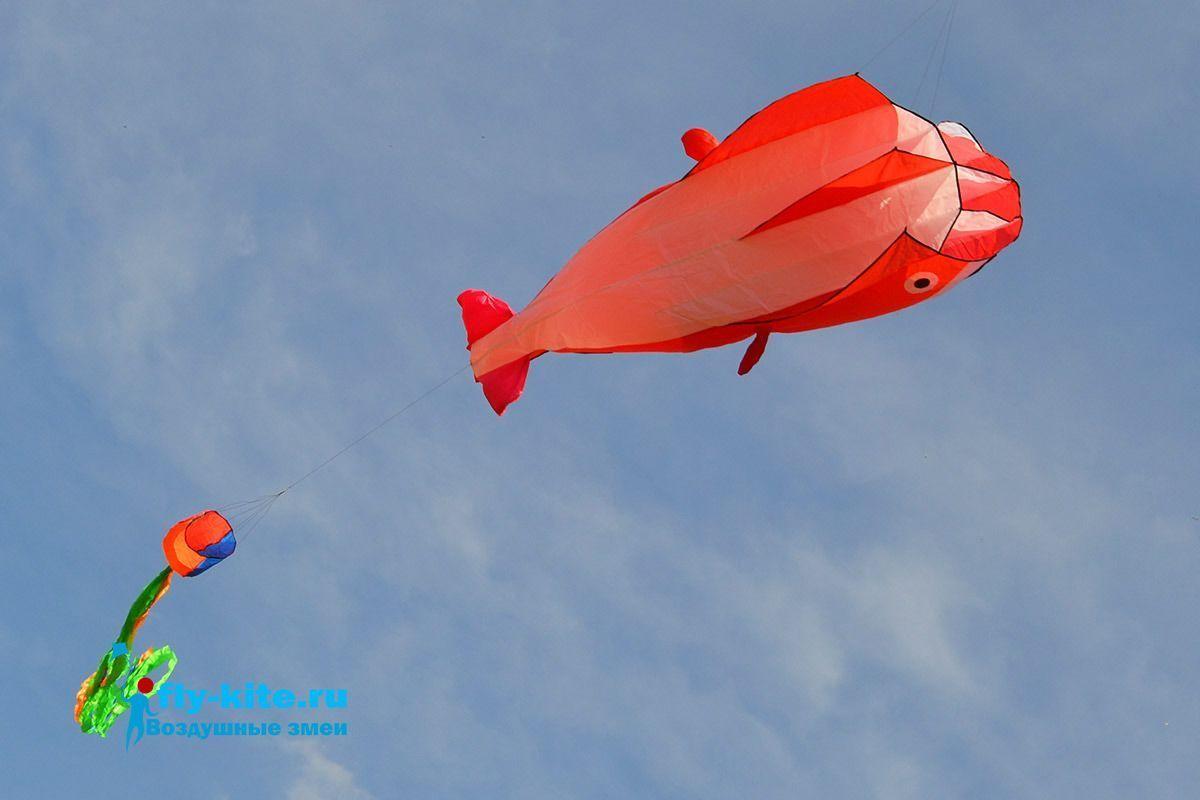 Красный поющий кит изображение 1