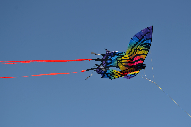 Бабочка Монтела изображение 0