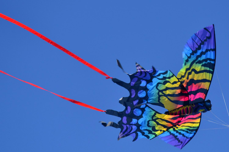 Бабочка Монтела изображение 2