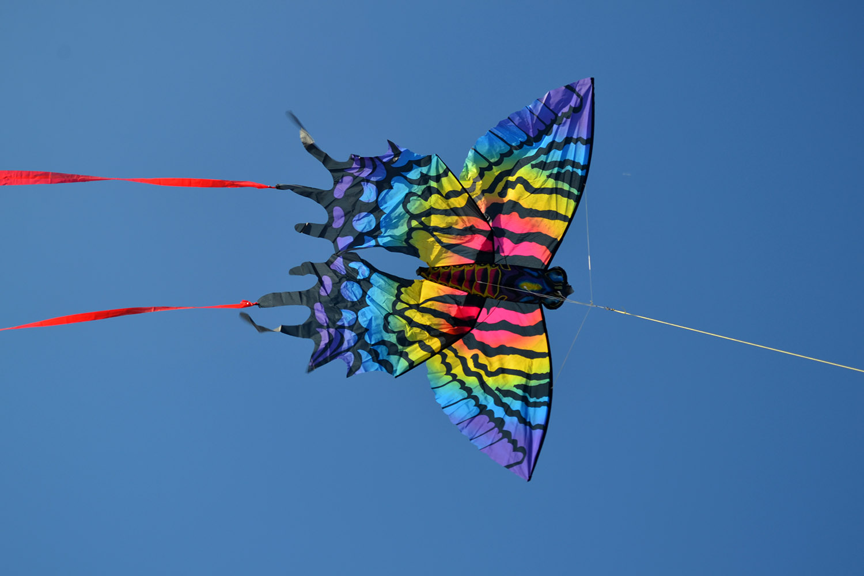 Бабочка Монтела изображение 5