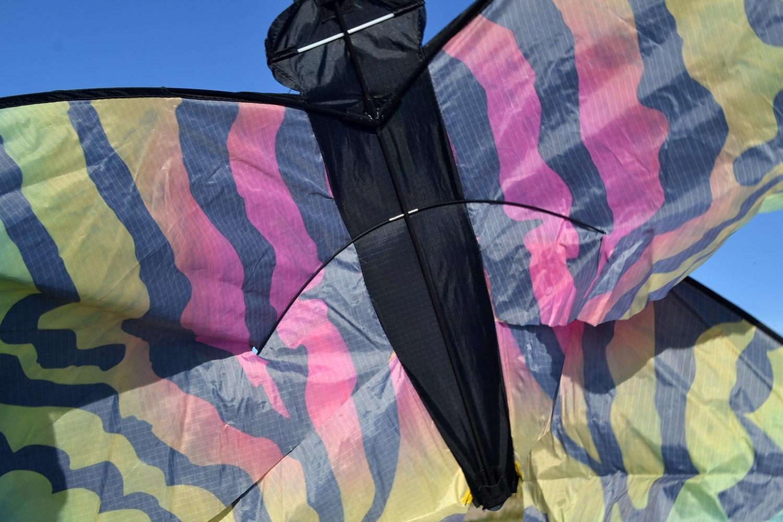 Бабочка Монтела изображение 6