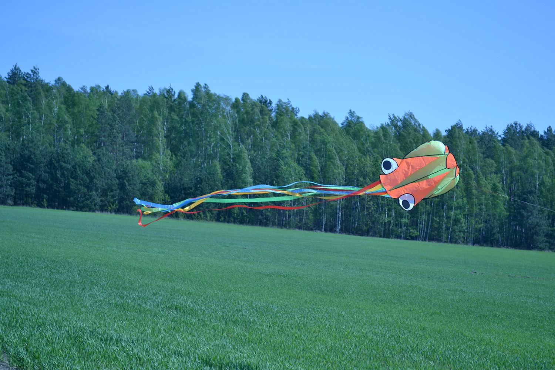 Оранжевый осьминог изображение 0