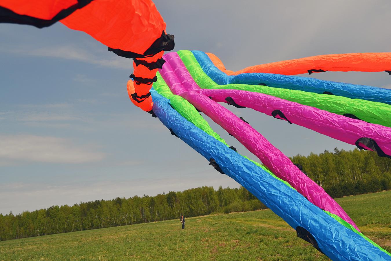 Цветной Осьминог изображение 3