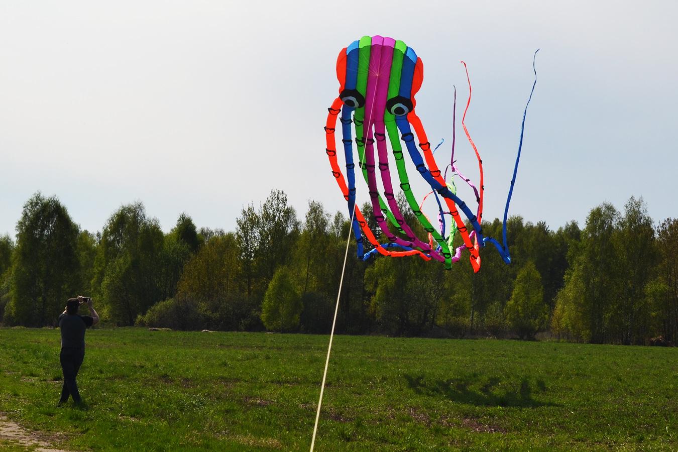 Цветной Осьминог изображение 5