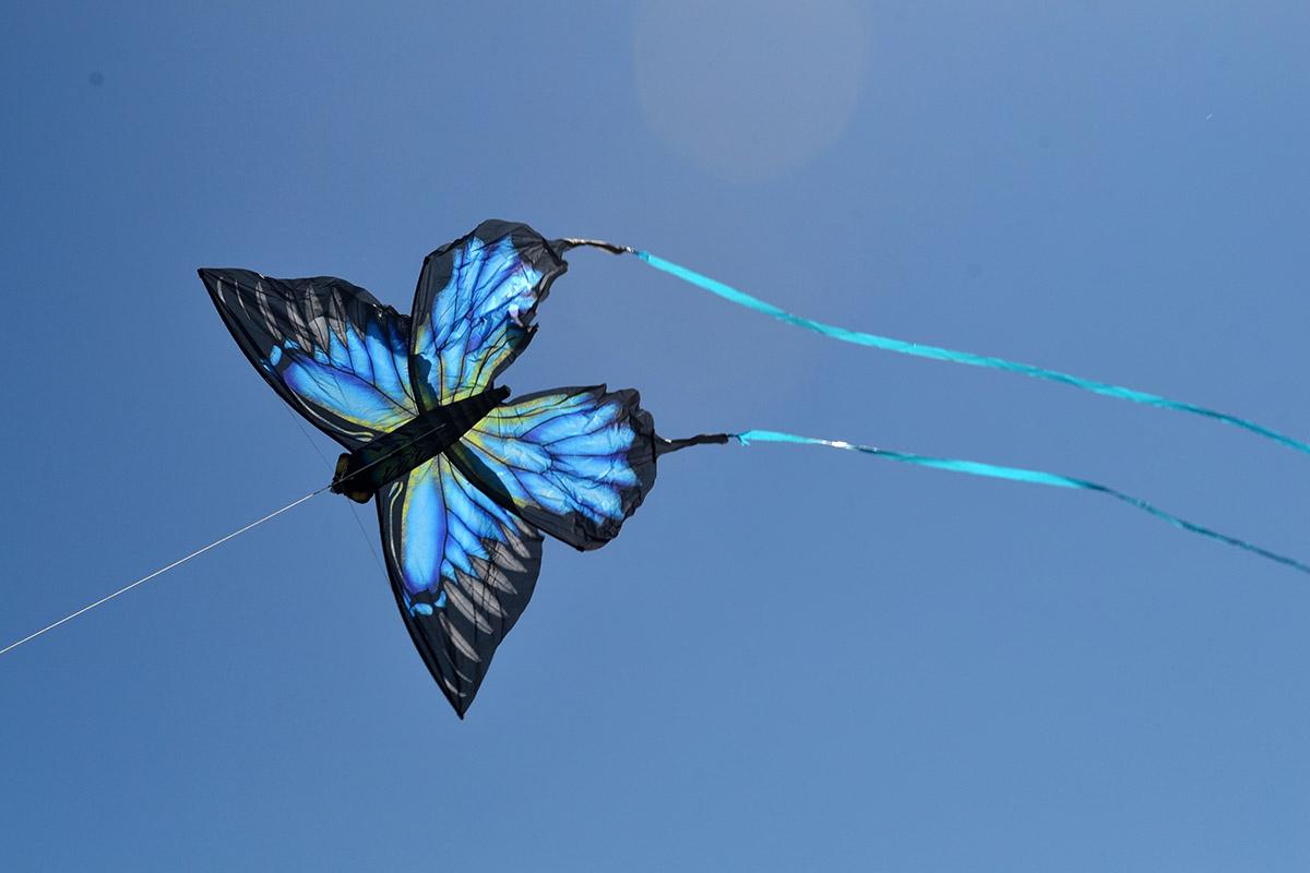 Синяя Пелеида изображение 1