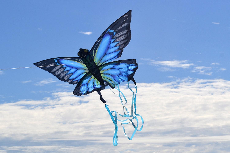 Синяя Пелеида изображение 2