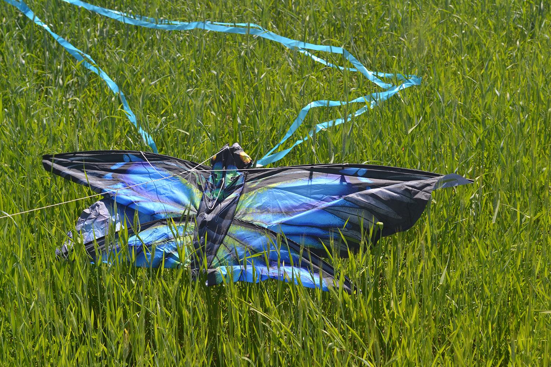Синяя Пелеида изображение 3