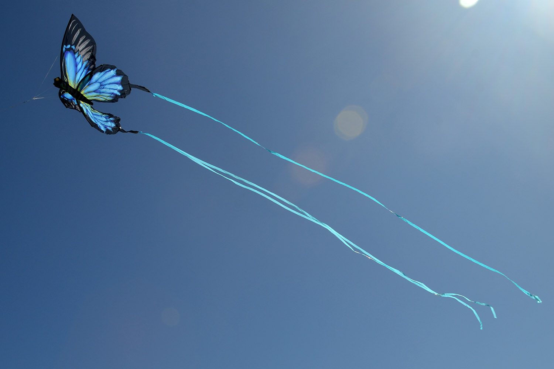 Синяя Пелеида изображение 4