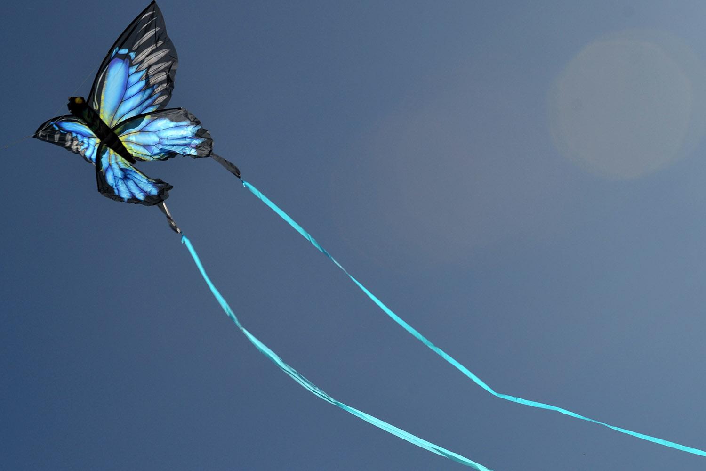 Синяя Пелеида изображение 5