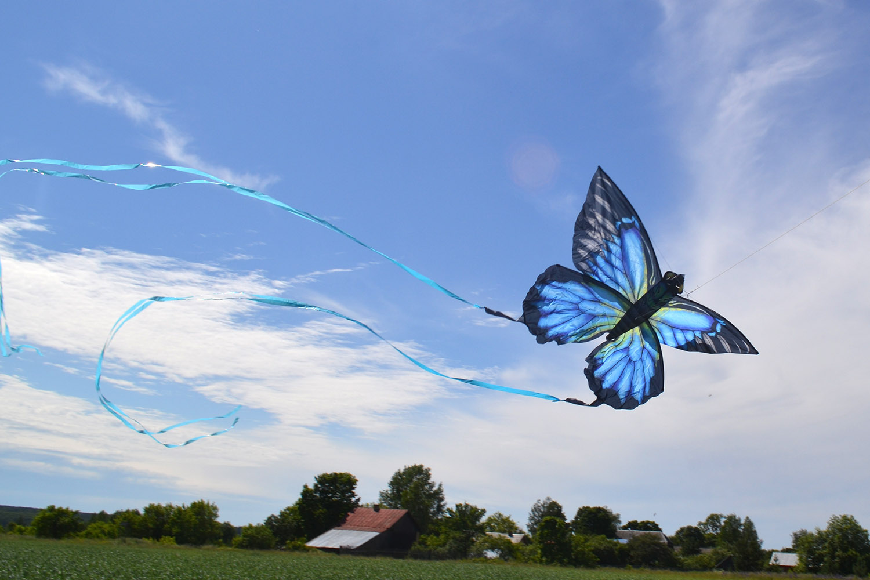 Синяя Пелеида изображение 6