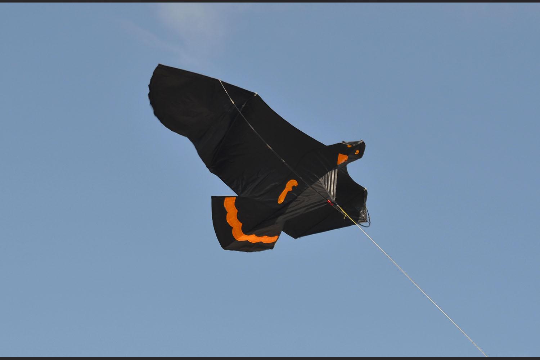 Черный ворон изображение 0
