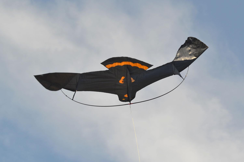 Черный ворон изображение 1