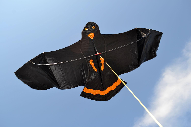 Черный ворон изображение 2