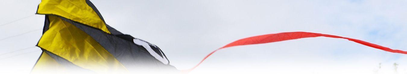 Цветной осьминог изображение 2