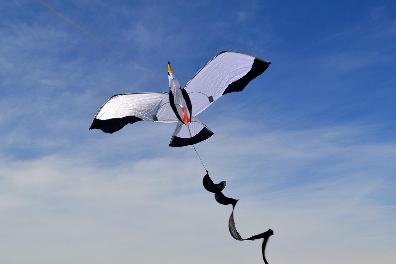 Чайка 3D изображение 0