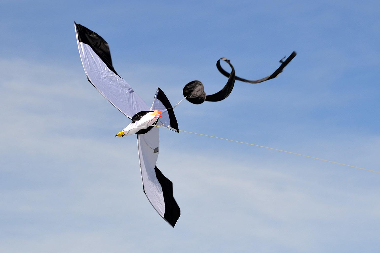 Чайка 3D изображение 1