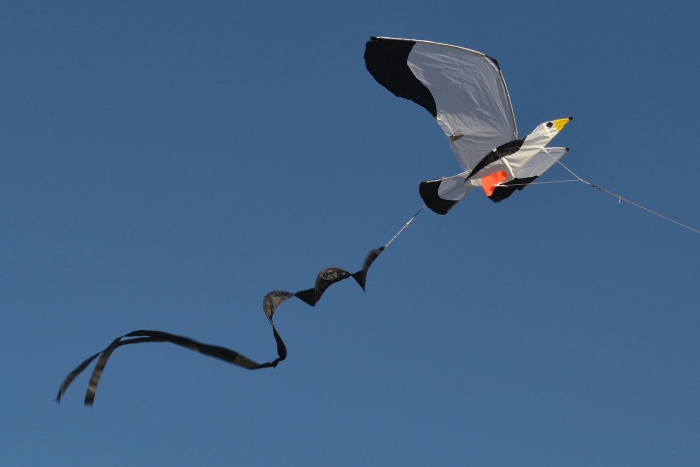 Чайка 3D изображение 3