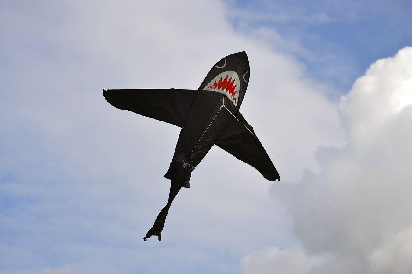Черная Акула изображение 1