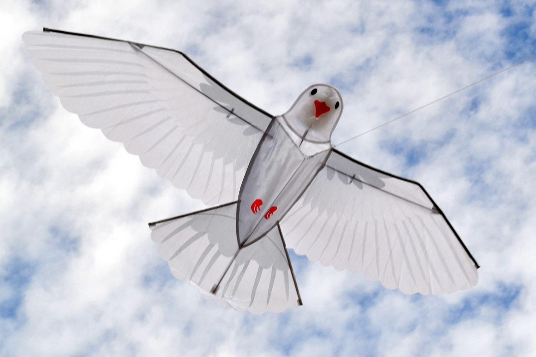 Белый голубь изображение 1