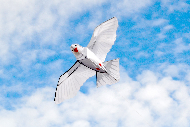 Белый голубь изображение 3