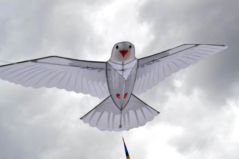 Белый голубь изображение 4