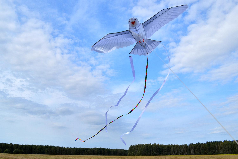 Белый голубь изображение 7