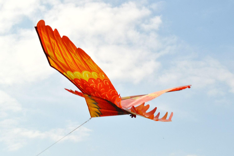 Огненный петушок изображение 3